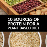 plant based diet protein